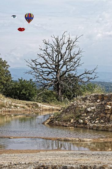 L arbre dxo
