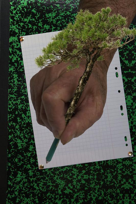 Sauvez les arbres
